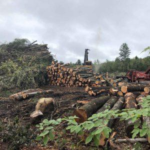 log-procurement-3